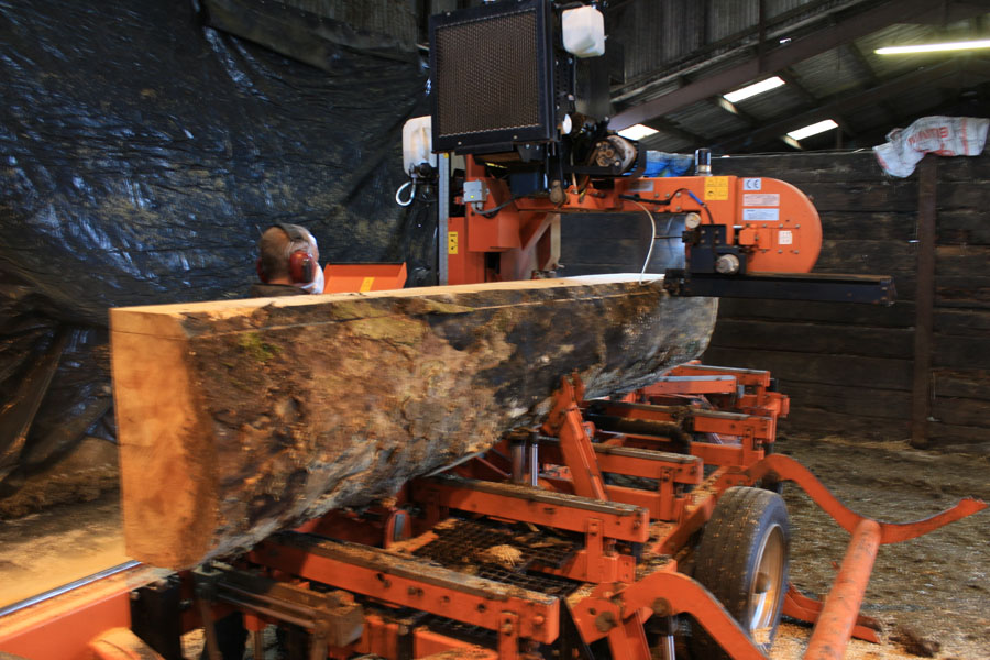 MILLING SYCAMORE